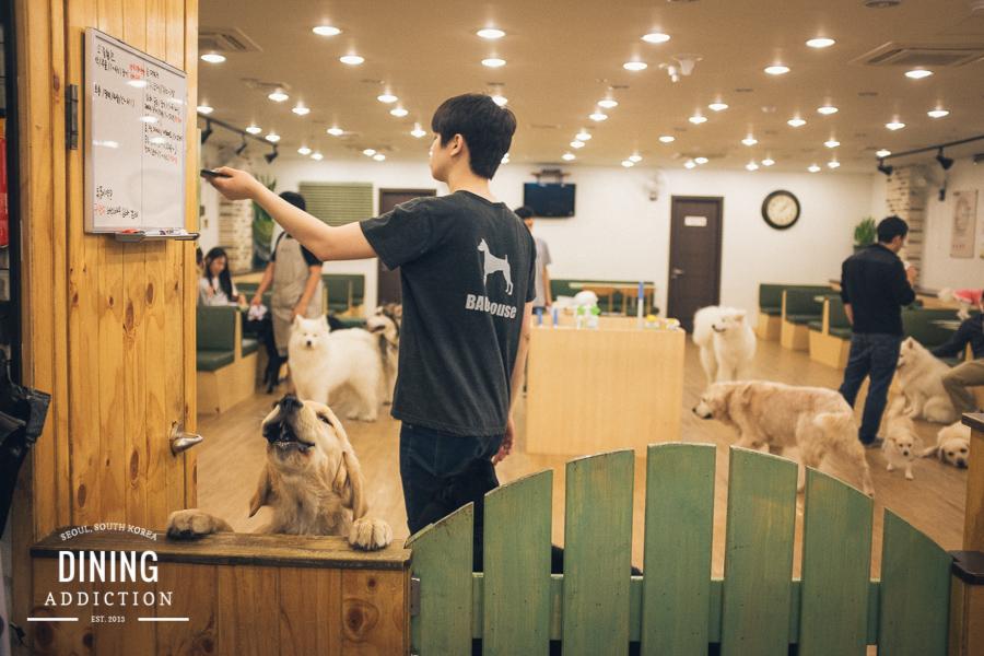 Bauhouse Dog Cafe003 Bau House Dog Cafe 바우하우스 애견카페 hongdae %ed%99%8d%eb%8c%80 cafe  애견카페 south korea seoul restaurant review seoul cafe review seoul cafe korean restaurant review korea hongdae dog hotel dog daycare dog cafe bau house dog cafe